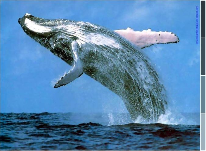 baleia01