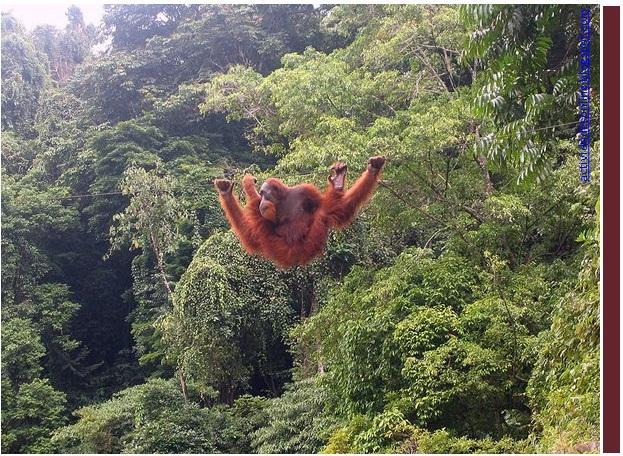 orangotango5