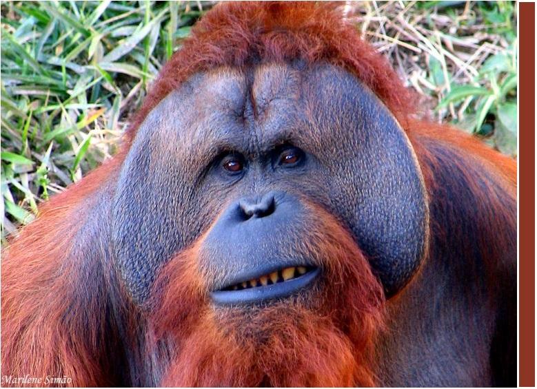 orangotango6