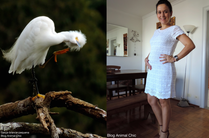Blog Animal Chic 8