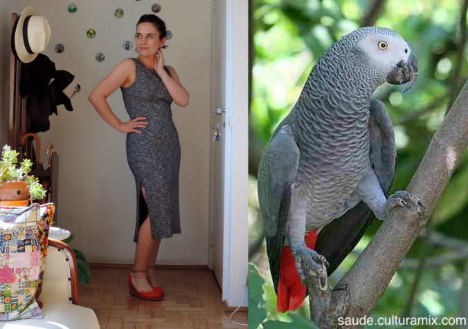 Blog Animal Chic